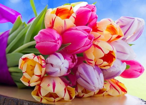 tulips+